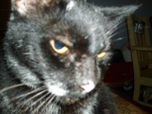Pyewacket the black cat from Galveston Island!