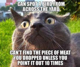 Bird Loving Cat