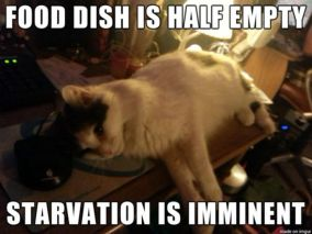 Starvation Kitty